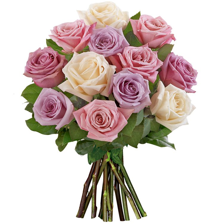 12 Rosas Importadas Mescladas  Flores  Cestas Michelli