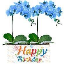 Happy Birthday com Orquídeas Azuis