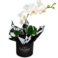 Glamurosas Orquideas