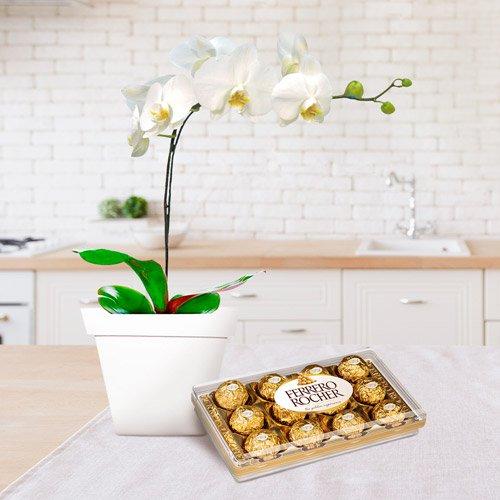 orquídeas phalaenopsis plantada com chocolate