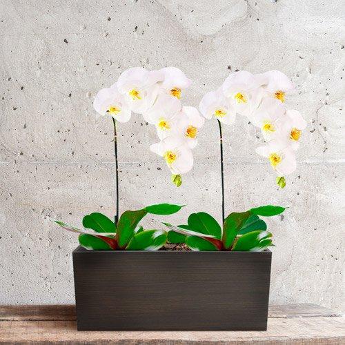 jardim de orquideas plantadas