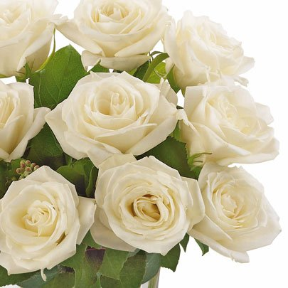 Brilhantes Rosas Brancas no Vaso