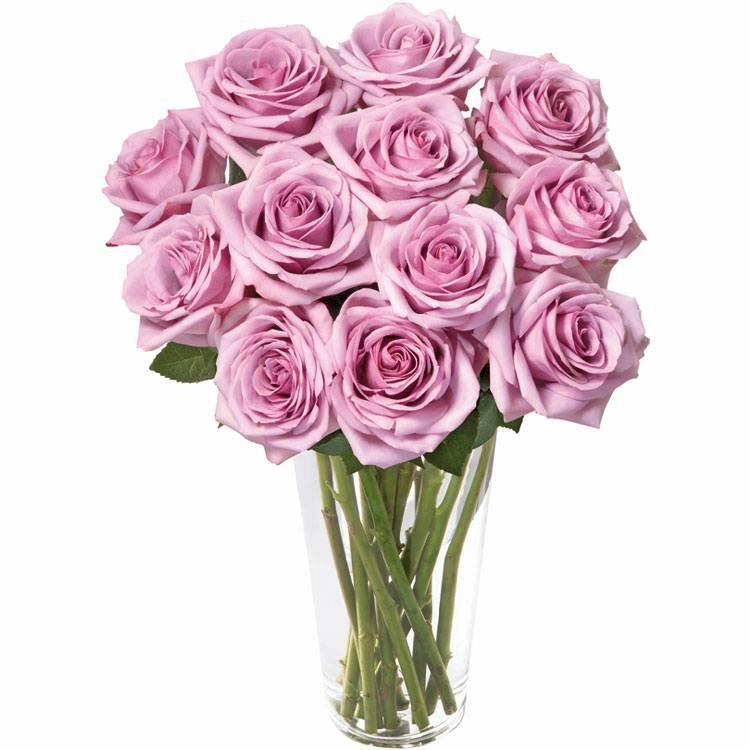 Brilhantes Rosas Lilás no Vaso