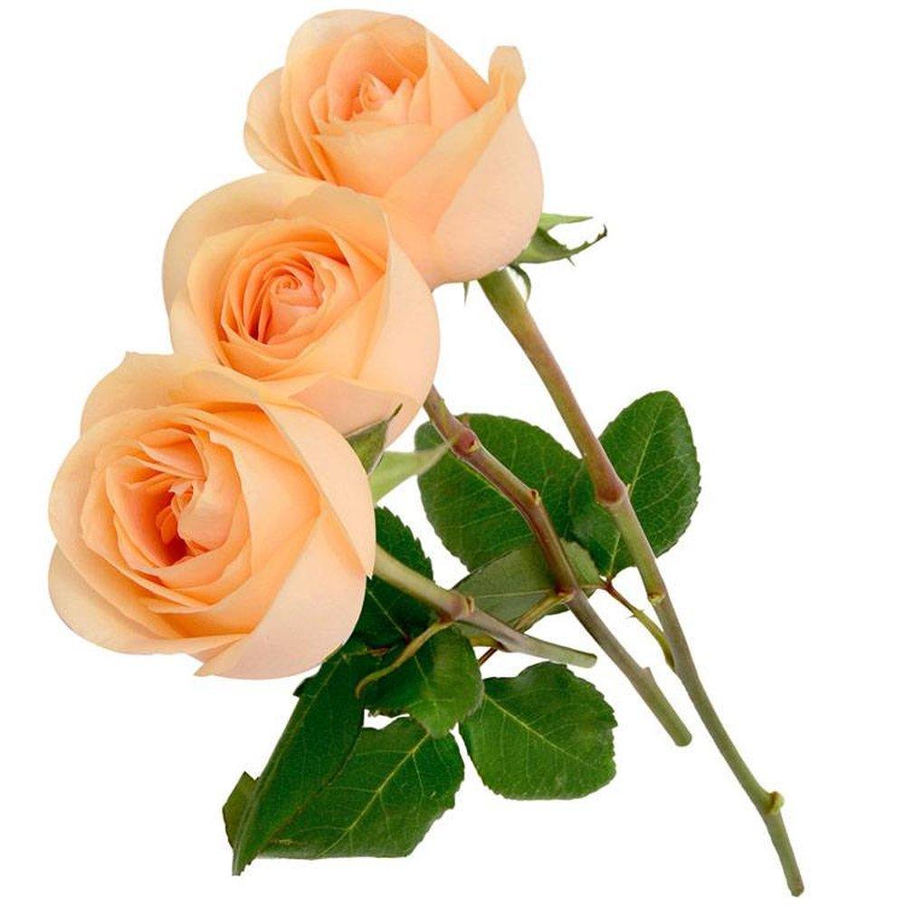 Três Rosas Colombianas Champanhe