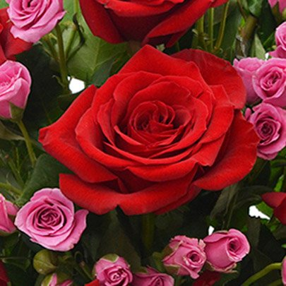 Luxuosas Vermelhas e Lilás no Vaso