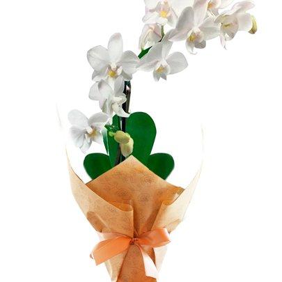 Mini Orquídea Rara Branca