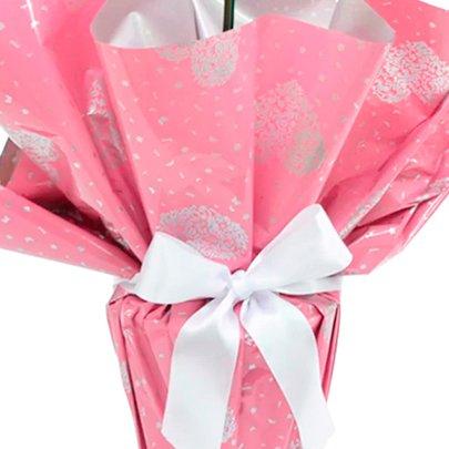 Orquídea Phalaenopsis Pink Presente