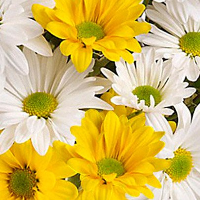 Luxuoso Mix de  Margaridas Brancas e Amarelas Luxo