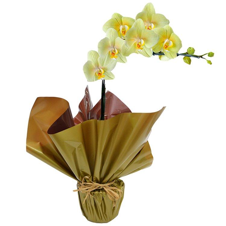 Orquidea Phalaenópsis Amarela Presente