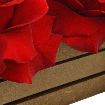 Baú das Rosas