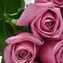 Buquê de 30 Rosas Lilás
