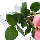 Buquê de 6 Rosas Cor de Rosa