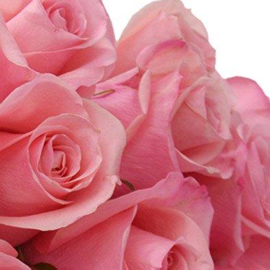 Buquê de 18 Rosas Cor de Rosa