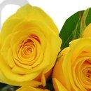 Buquê de 12 Rosas Amarelas