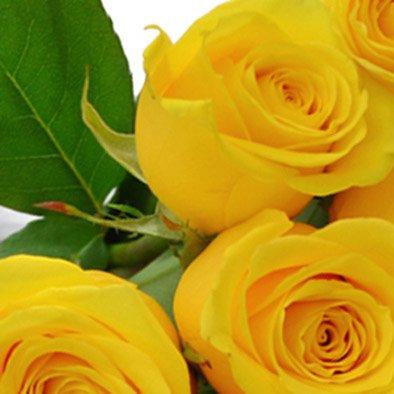 Buquê de 18 Rosas Amarelas