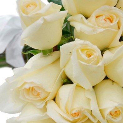 Buquê de 50 Rosas Brancas