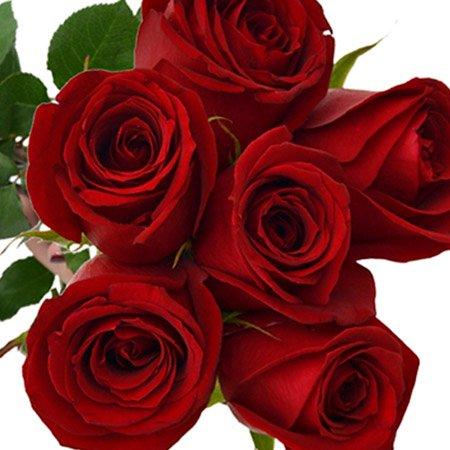 Buquê de 6 Rosas Vermelhas e Espumante