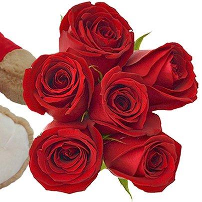 Urso com 6 Rosas Vermelhas