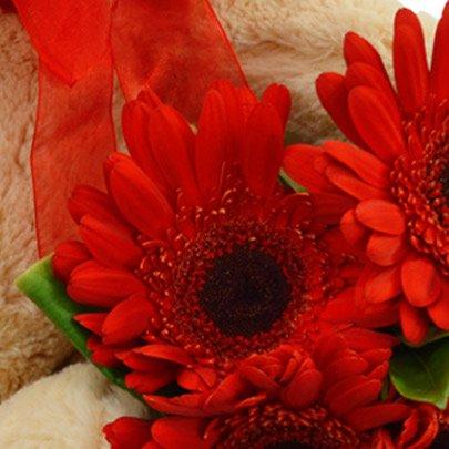 Kit Gérberas Vermelhas com Pelúcia