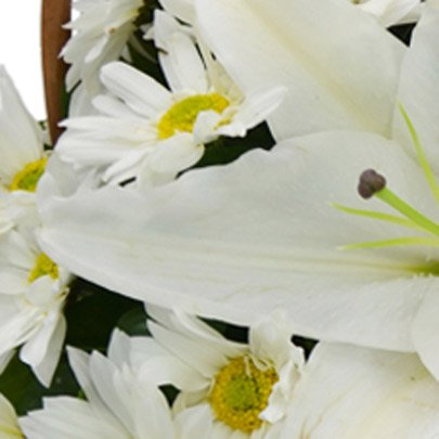 Cesta de Margaridas e Lírios Brancos com Pelúcia