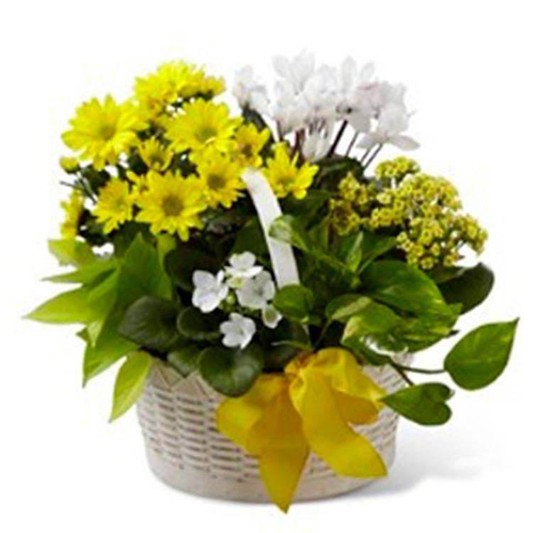 Flower Yellow & White Internacional