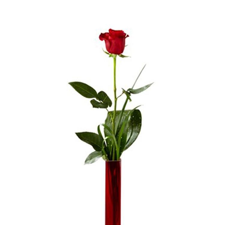 Flower Rosa Red Internacional