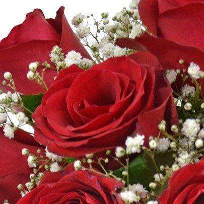 Elegância das Rosas Vermelhas