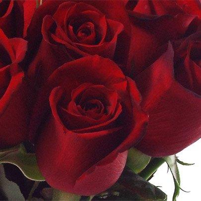 20 Rosas Vermelhas no Vaso