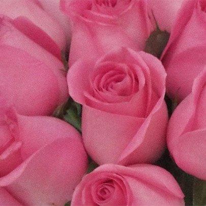 20 Rosas Cor de Rosa no Vaso