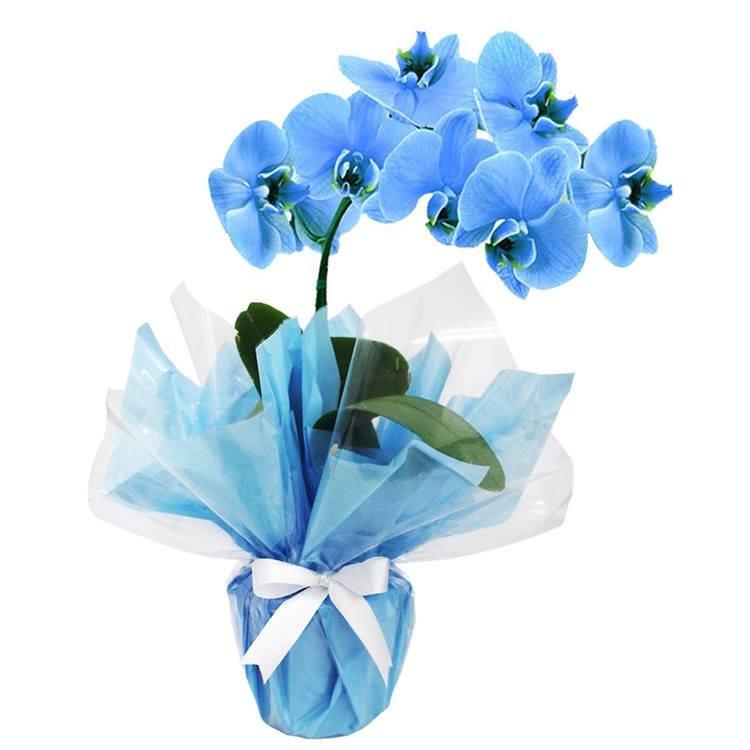 Orquídea Azul