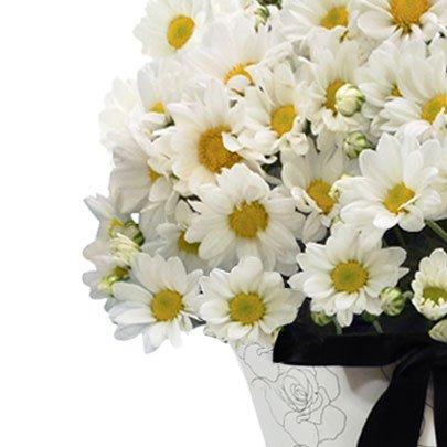 Buquê Magnificas Margaridas Brancas