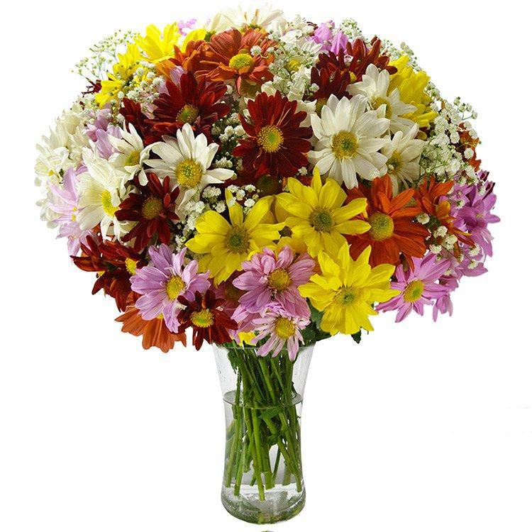 Beleza das Flores Silvestres