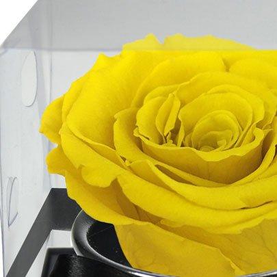 Rosê Encantada Yellow