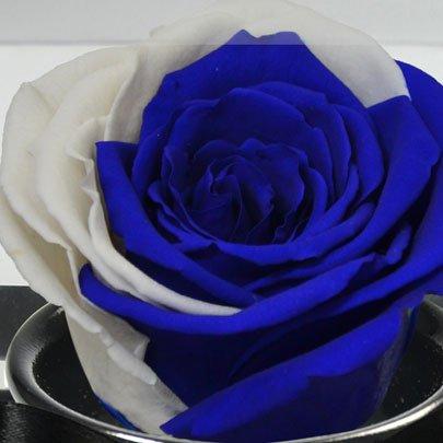 Rosê Encantado Blue Moon