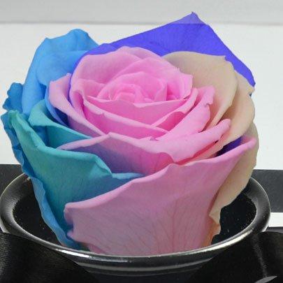 Rosê Encantada Candy Color