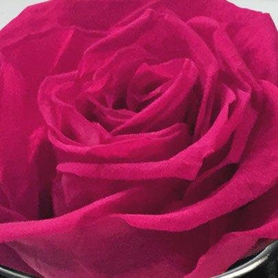 Rosê Encantada Pink