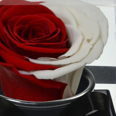Rosê Encantada Moon Red