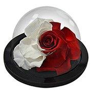 Globo de Rosa Encantada Moon Red