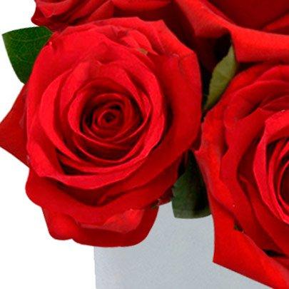 Passione de Rosas