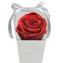Cone Branco de Rosa Encantada Vermelha