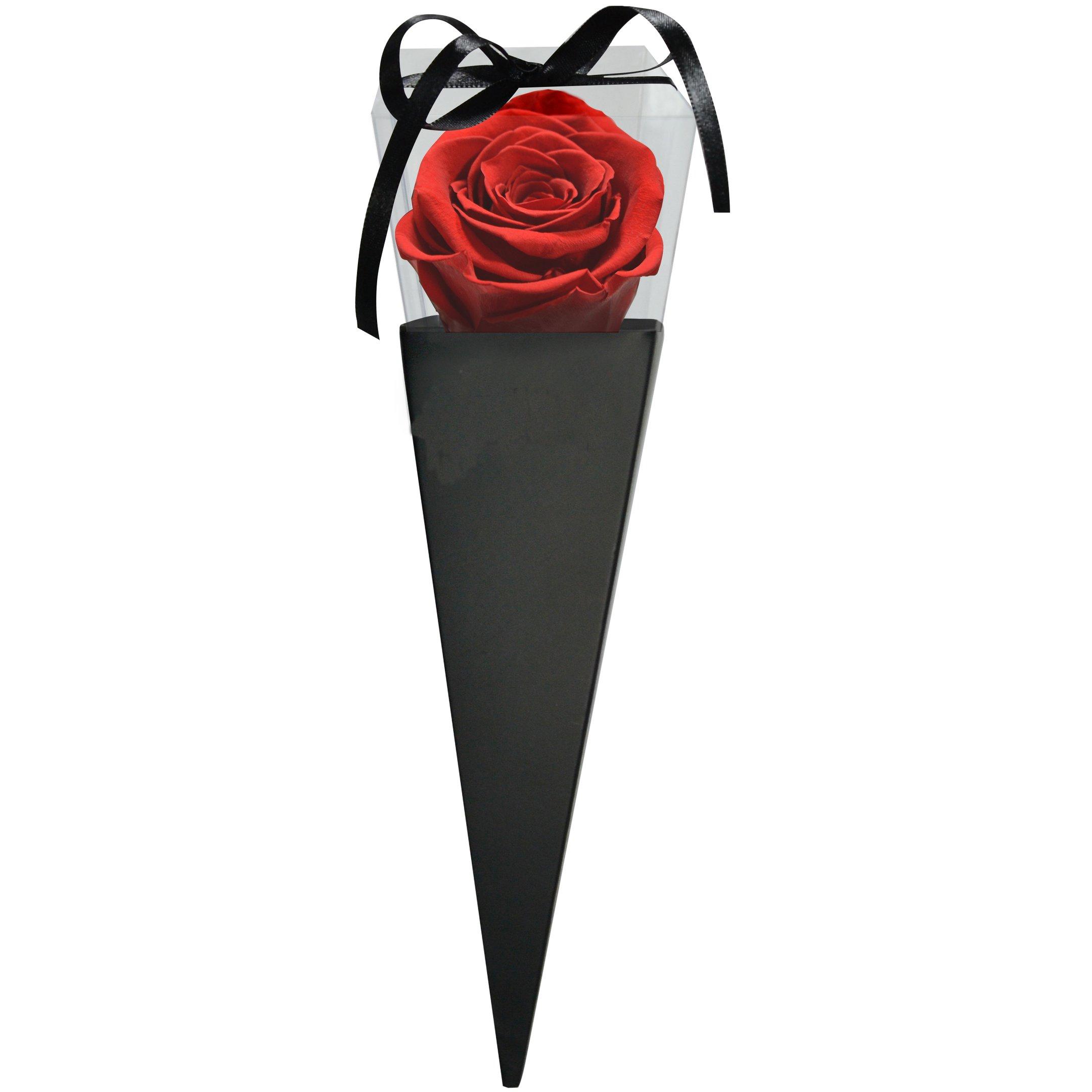Cone Preto de Rosa Encantada Vermelha