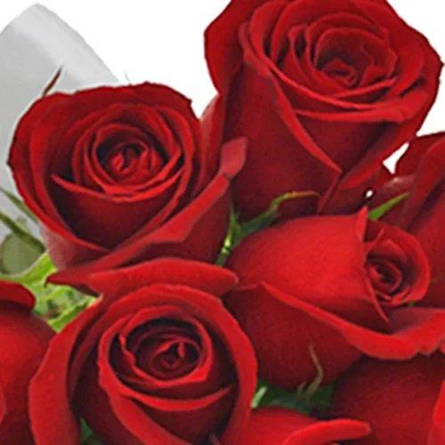 Buquê de 12 Rosas Vermelhas e Placa Love