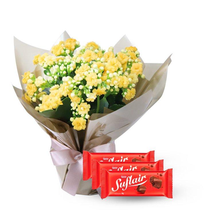 Lindo Kalanchoe Amarelo Plantado e Chocolate Suflair
