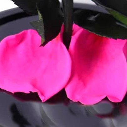 Mini Rosa Encantada Pink Mãe Te Amo
