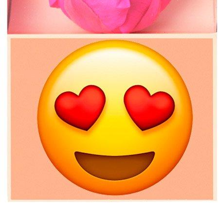Rosa Encantada Pink Apaixonado