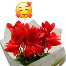 Mini Ciclame Vermelho com Emoji Coraçãozinho
