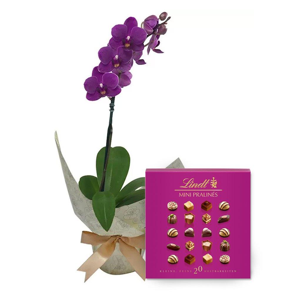 Mini Orquidea Rara Lilás e Lindt Mini Pralinés Pink
