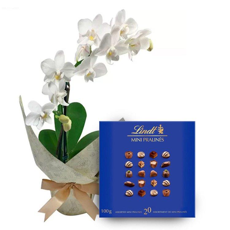 Mini Orquídea Rara Branca e Lindt Mini Pralines Blue