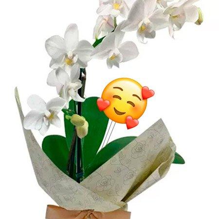 Mini Orquídea Rara Branca com Emoji Coraçãozinho
