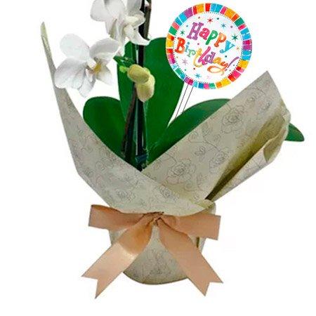 Mini Orquídea Rara Branca Happy Birthday
